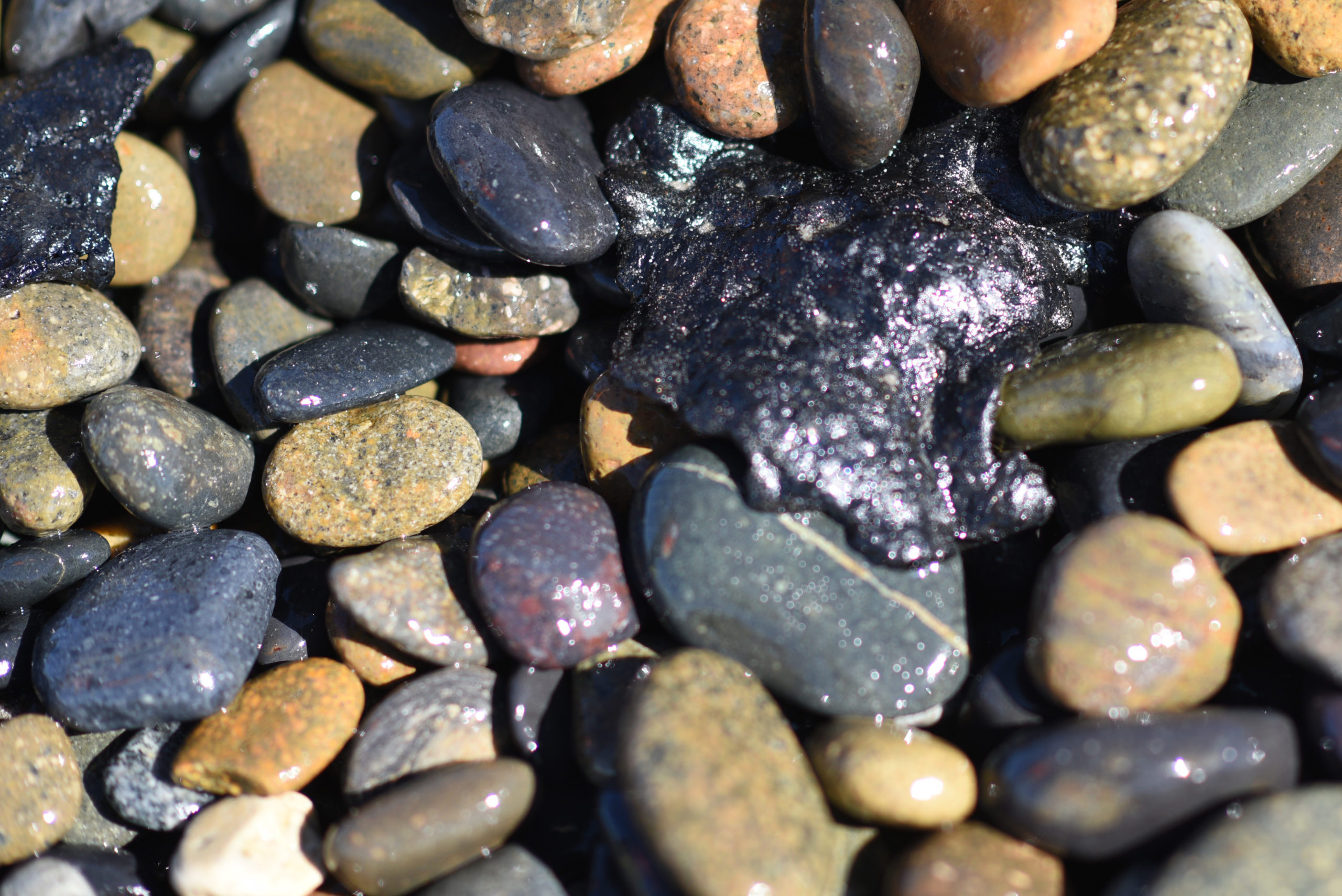 tar ball is shown on the shore of Oceanside Harbor Beach in San Diego County following the Orange County oil spill