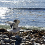 UPDATE: MEDIA AVIALABILITY: Rehabilitated wildlife impacted by oil spill to be released